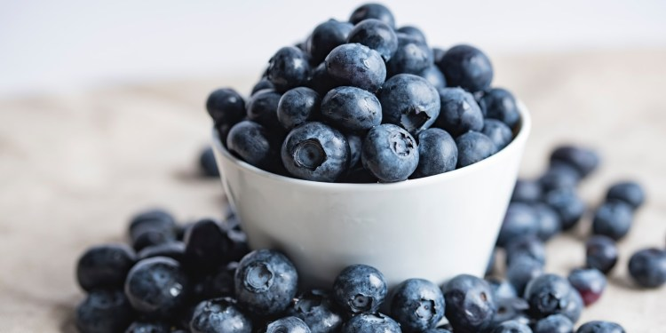 blueberries on white ceramic container, u-pick blueberry farms