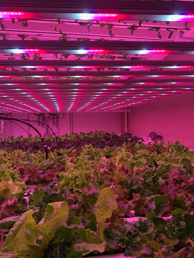 vertical plants at Yellowhammer Farms