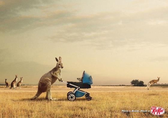 kitkat kangaroo