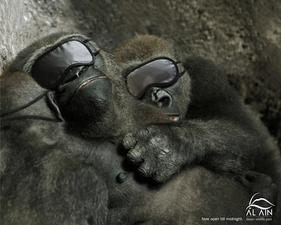 Al-Ain-Gorilla.jpg