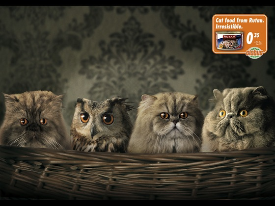 Rutan-owl.jpg
