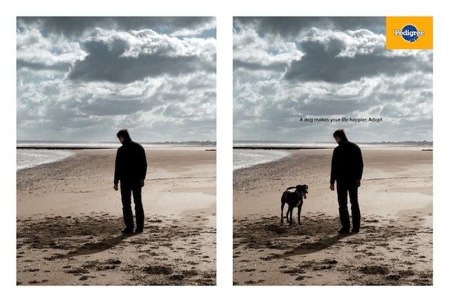 Pedigree-Dog1