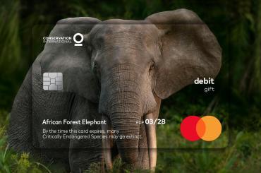 Mastercard Wildlife Impact Card