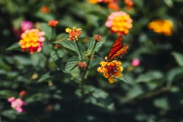 Coronavirus Blog Banner - Natural Environment - UnSplash - Diego Gavilanez
