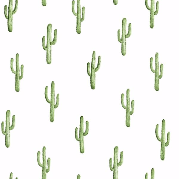 Small Cactus Sale