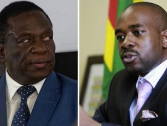 A Tale of Two Horses : Zimbabwe Presidential Elections