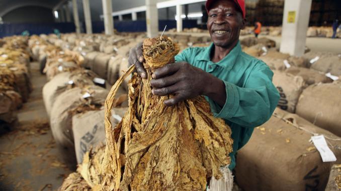 Makorokoza Haunt Boka Tobacco Floors