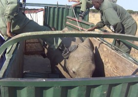 Lawyer Petition Zimbabwe Parliament on Wildlife Trade