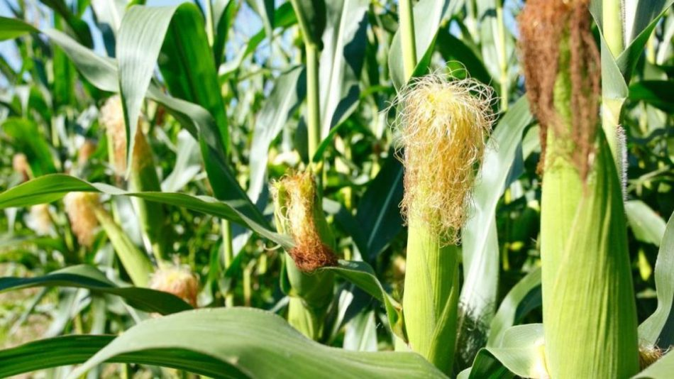 Projections of The Zimbabwean 2021 Agricultural Season