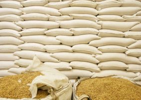 GMAZ Accuses Government for Current Roller Meal Supply in Zimbabwe