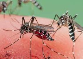 Malaria Kills More Than COVID-19 During 20 Days Of Lockdown