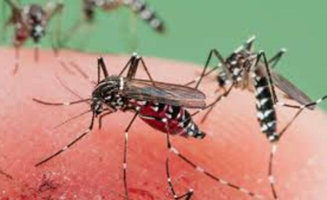 Malaria Kills More Than COVID-19 During 20 Days Of Lockdown