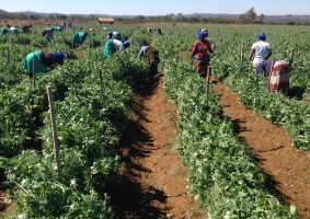Agricultural Activities and Linked Services That Will Continue During Zimbabwe's Lockdown