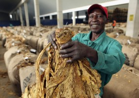 Tobacco First 16 Days Sells Surpasses Comparative 2018 – 2019 season by 540%.