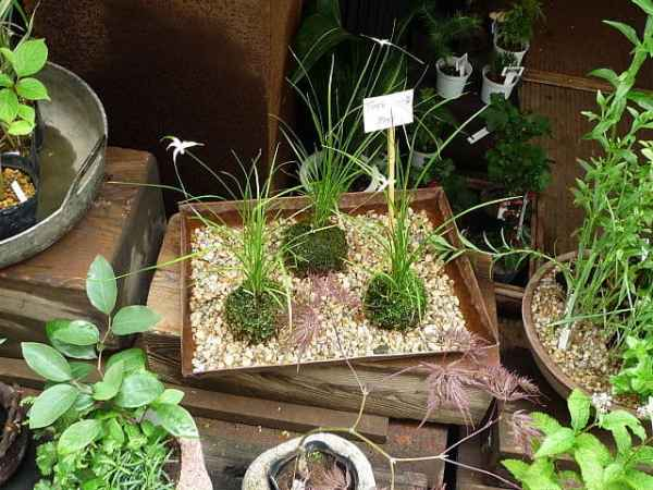 M&T Kokedama - Bowman's Hill Wildflower Preserve