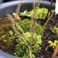 Bog planter