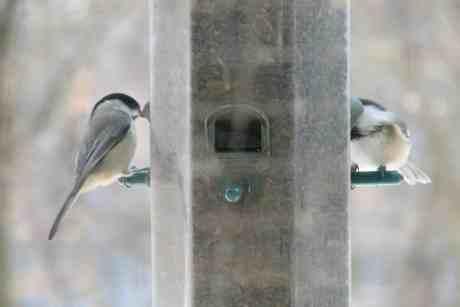 Feeding Wild Birds 101
