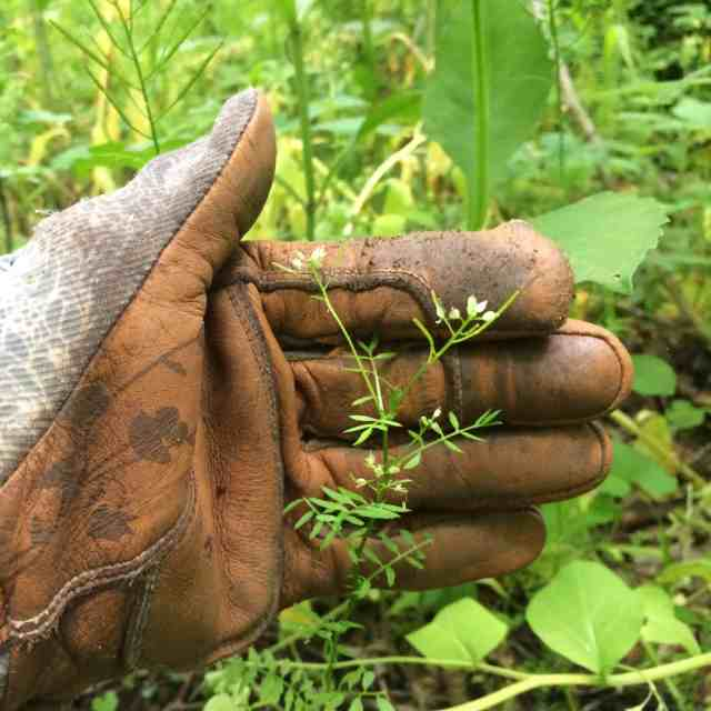 Invasive species ID and management