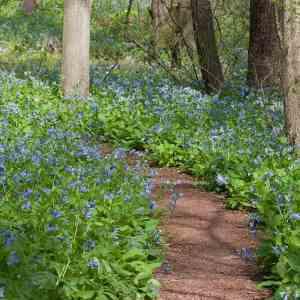 Guided Wildflower Walks