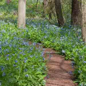 Guided Wildflower Walks