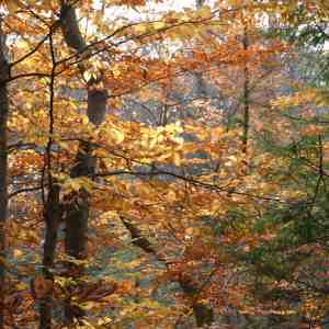 Knowing Native Plants: Trees in Winter