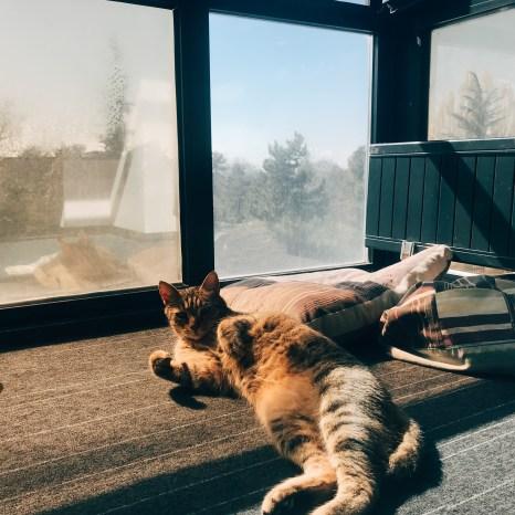 Motto Mimarlık'ta uzaktan çalışmaya başlayanların masalarını devralan kediler