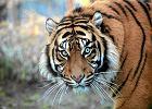 Nawet jedna szósta gatunków zagrożonych wyginięciem