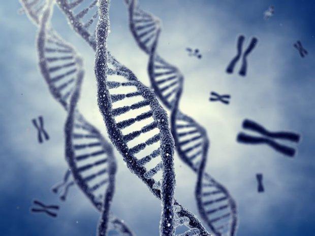 Helisa DNA