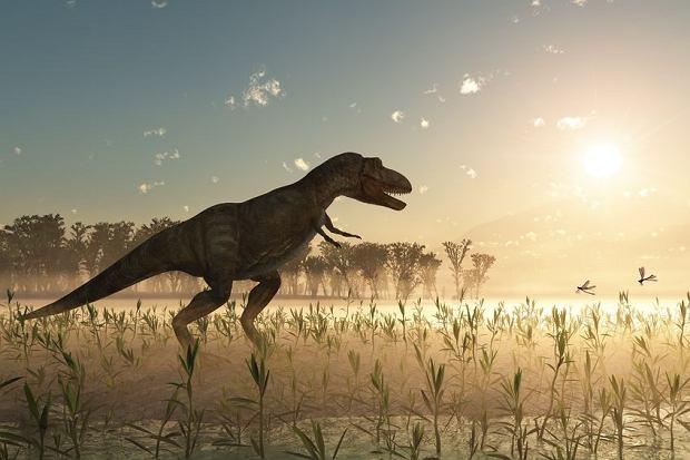 Część teorii zakłada, że dinozaury wyginęły w wyniku uderzenia asteroidy i wywołanych przez to gigantycznych pożarów.