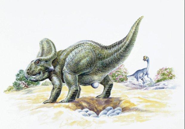 Dinozaury składały nawet po kilkanaście jaj, a ponieważ znaczna część z nich nie dożywała wieku dojrzałego, ich populacje powinny być dość młode wiekowo. Osobniki dorosłe i starzejące się wcale nie stanowiły większości. Przeważały zwierzęta dopiero rosnące