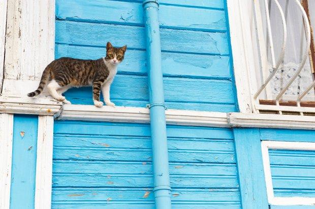 W internecie można kupić specjalne obroże z lokalizatorami GPS, które pozwalają na śledzenie kota m.in. na mapach Google'a