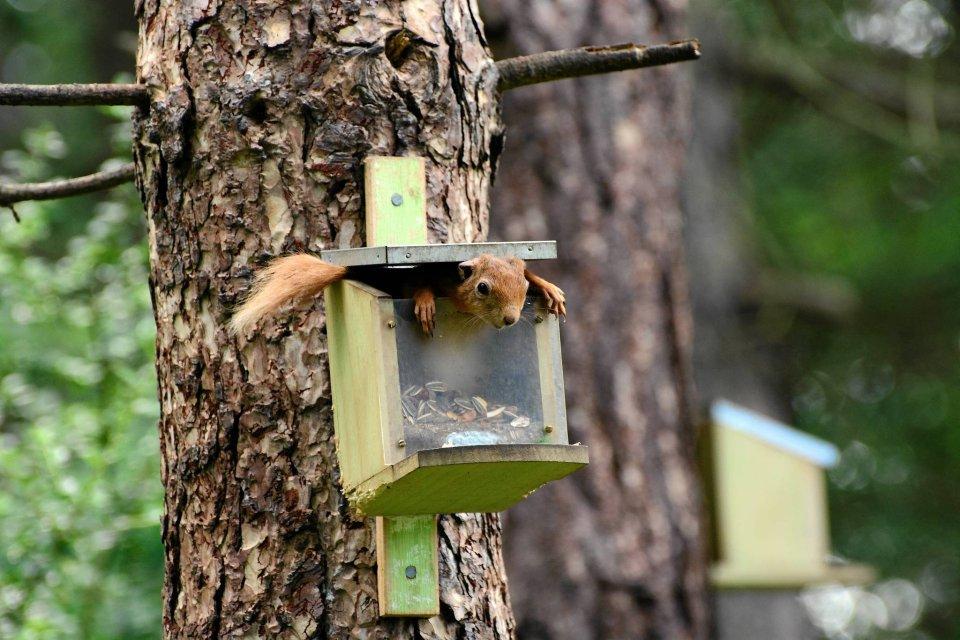 Comedy Wildlife Photo Awards to nietypowy konkurs fotograficzny. Jury wybiera najśmieszniejsze zdjęcia zwierząt. Oto najciekawsze, jak dotąd, zgłoszenia. Na zdjęciu: wiewiórka w szkockim lesie sosnowym.
