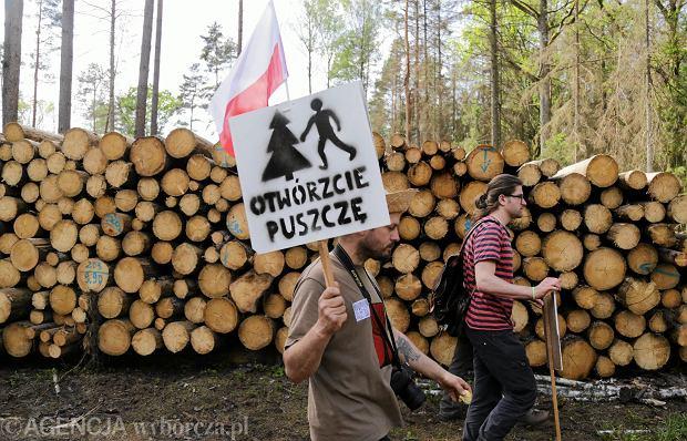 Zdjęcie numer 2 w galerii - Szyszko nie wstrzymał wycinki w Puszczy Białowieskiej. Ekolodzy blokowali tiry z drewnem