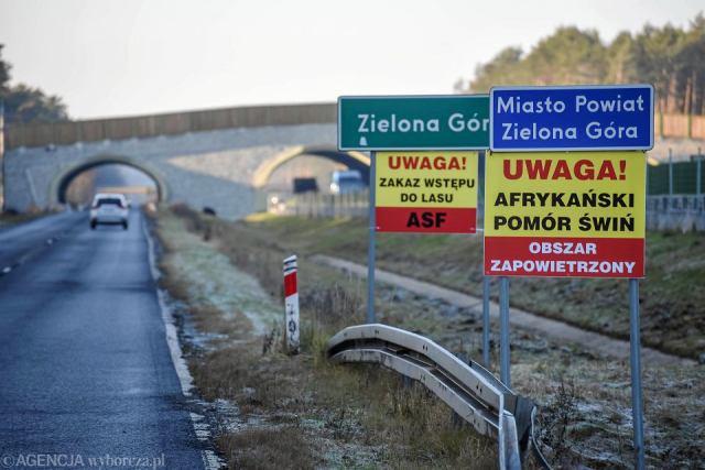 ASF na zachodzie Polski.