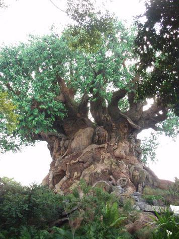 0 nn nn p293338-Orlando_FL-Tree_of_Life