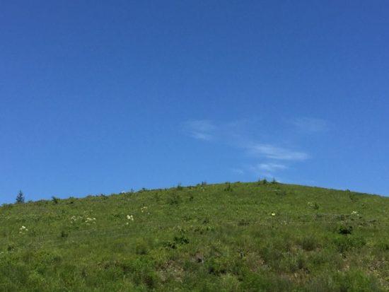 ニッコウキスゲの丘 開花状況2018年7月24日画像