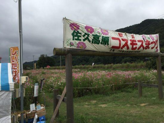 長野県佐久市コスモスまつり街道コスモスまつり画像