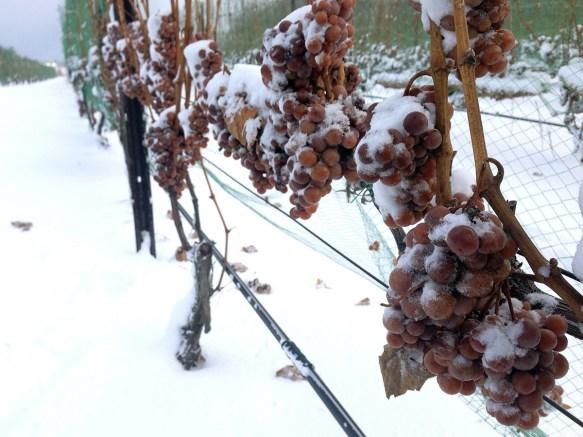 ice-wine-vino-