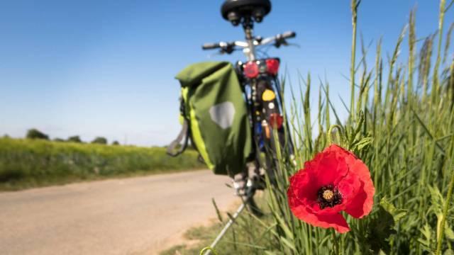 Fahrrad im Grünen mit Gepäcktasche