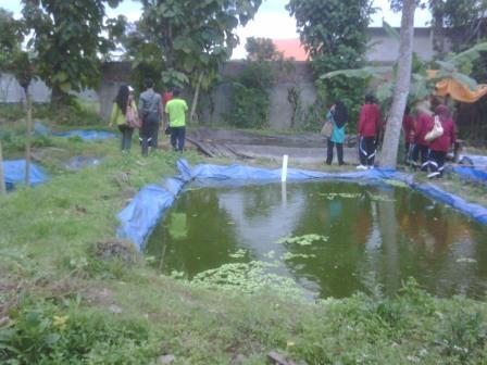 kolam gurami