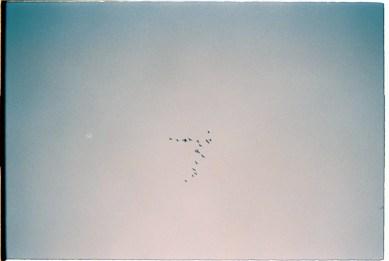 migrating-birds