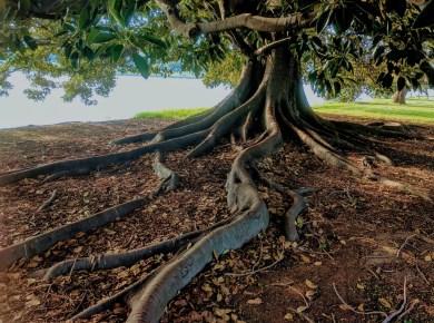 tree serpent eve