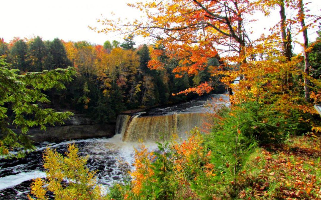 of waterfalls, honey, and mushrooms