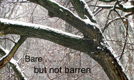 when you're bare but not barren