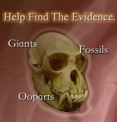 Help find the Evidence