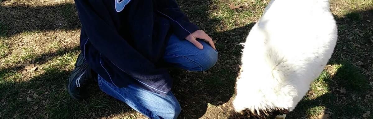Palm Sunday & Lamb Selection Day