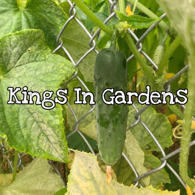 KIDScast#71 Kings In Gardens