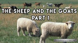 The Sheep and The Goats Seires (3 x Video) Post