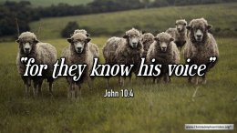 "Thought for April 17th. "" … FOR THEY KNOW HIS VOICE"""