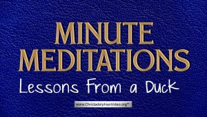Minute Meditation -Lessons From a Duck